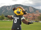 University of Colorado at Boulder Mascot